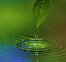 Location . Library Image: Leaf and Water